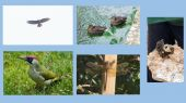 ducks_elephant_hawk_moth
