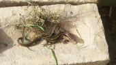 lizard04
